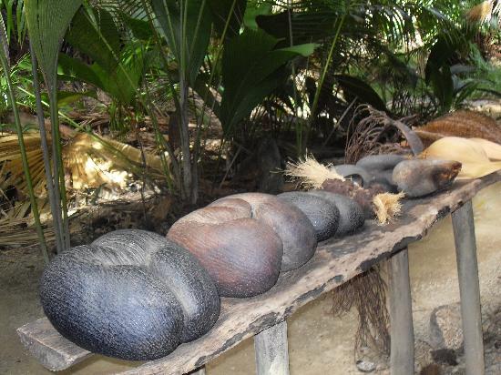 Praslin, Seychellerna: il cocco di mare
