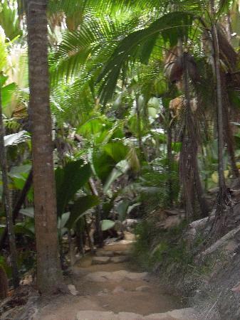Praslin-øya, Seychellene: Vallee de Mai