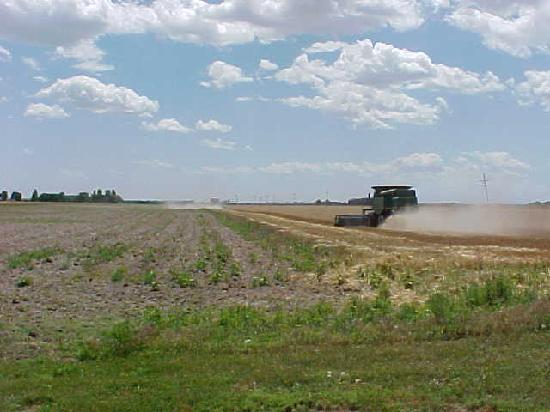 Hemingford, NE: combining wheat