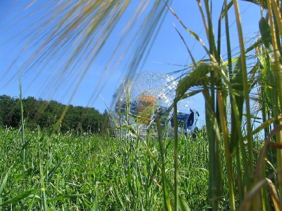 Zorb EKOPOOL Celje: Enjoy the scenery of surroundings