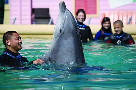 Vallejo, CA: Swim with the Dolphins at Discovery Kingdom