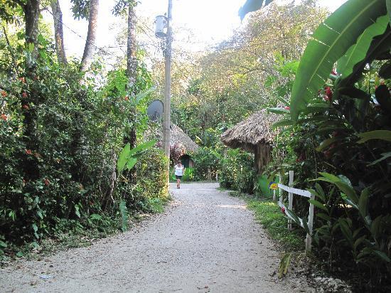 El Panchan: streets of the jungle resort