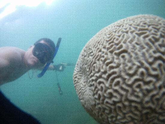 Santa Marta, Colombia: coral cerebro en parque tayrona