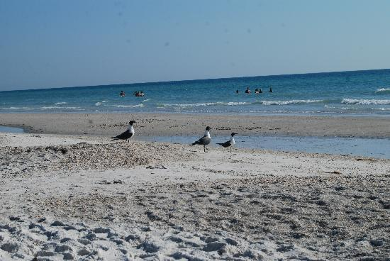 Holmes Beach, FL: The beach!
