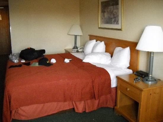 Quality Inn & Suites: King size bed, large room