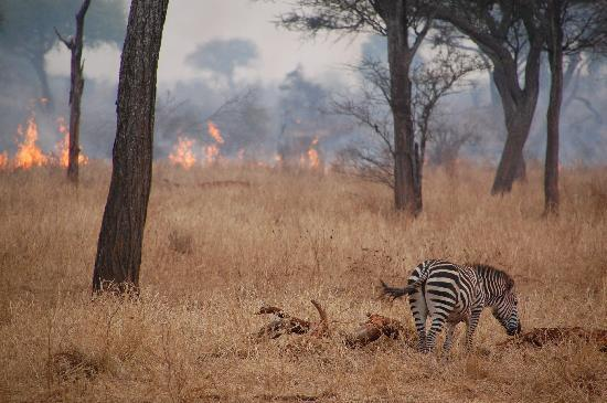 Kikoti Safari Camp: They were doing a controlled burn while were there -- made for great pics!