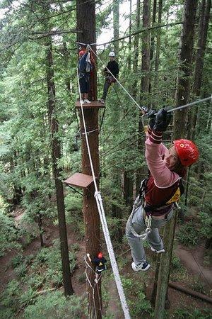 North Coast Adventure Centers : Arcata's Redwood Canopy Tour