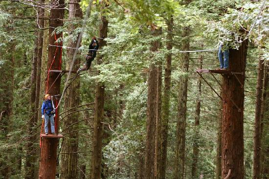 North Coast Adventure Centers : Canopy Tour