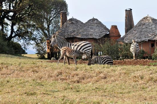 andBeyond Ngorongoro Crater Lodge 사진
