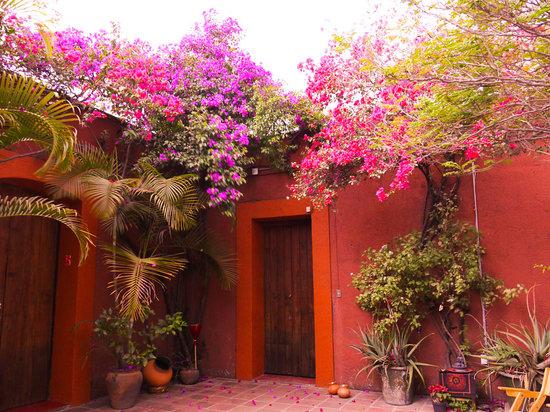 Hostal Casa del Sol Oaxaca: Flowers everywhere!!