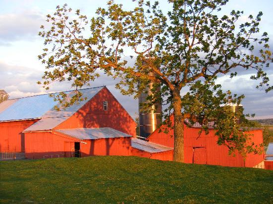 Country Log House Farm Bed and Breakfast: sun setting on the farm