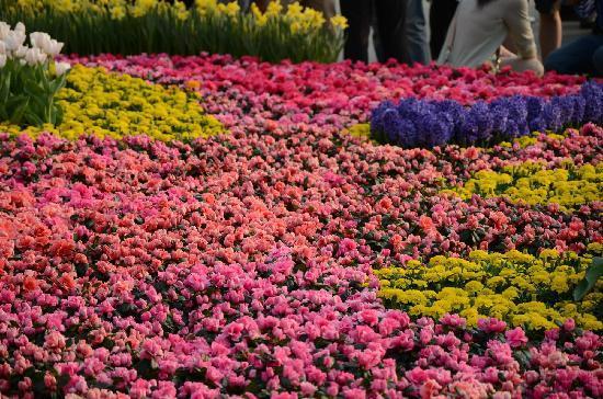 Hong Kong Flower Show: HK Flower 2