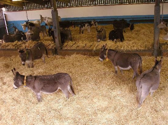 The Donkey Sanctuary: Sidmouth Donkey sanctuary