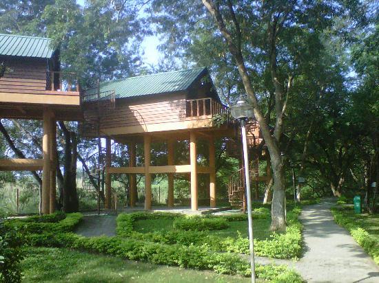 Bhavani Island Resort: Tree top house