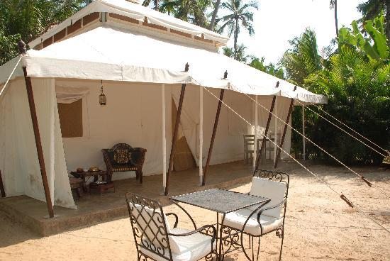 Amarya Shamiyana : Tent