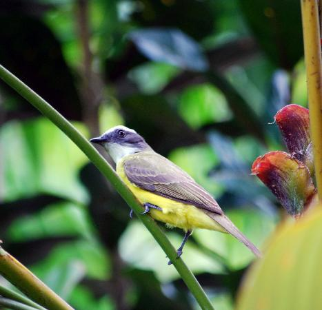 Arenal Springs Resort and Spa: Bird 2