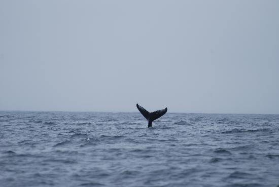 Trailhead Resort: Humpback Whale