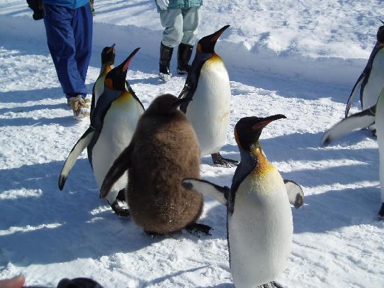 Asahikawa, Japón: ペンギンです