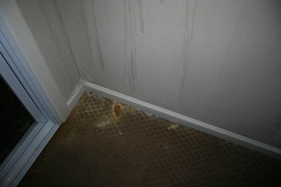 Belamere Suites: very very very dirty carpet