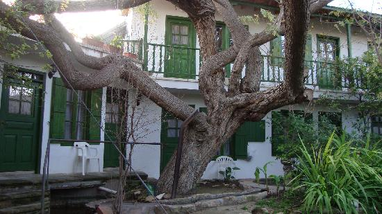 Anthony's Garden House: The big garden tree and the rooms