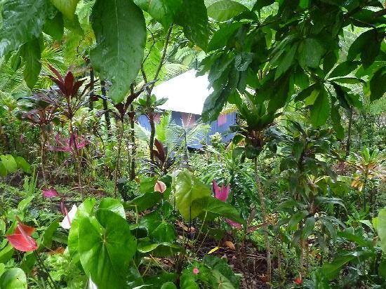Zen Gardens: Le jardin