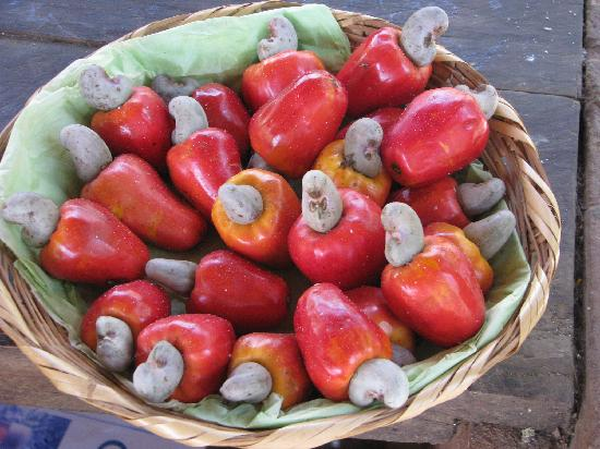 Hagia Sofia: the cashew fruit