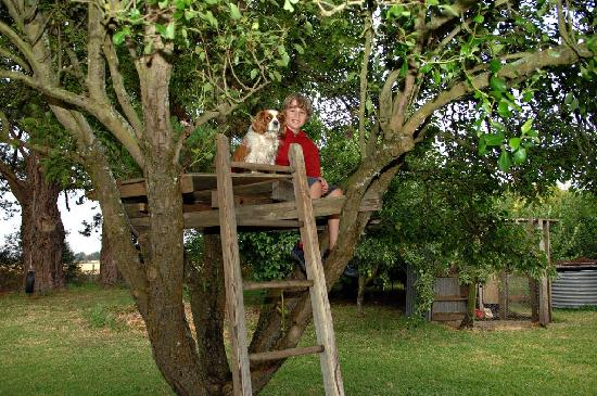 Lemon Gum B&B: Up the tree with Daisy