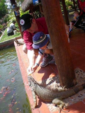 Melia Vacation Club Puerto Vallarta: The  iguana's loved the attention