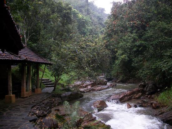 Kandy Samadhi Centre: Forest river where you can chill/explore