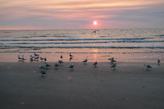 Beachside Motel Sunrise
