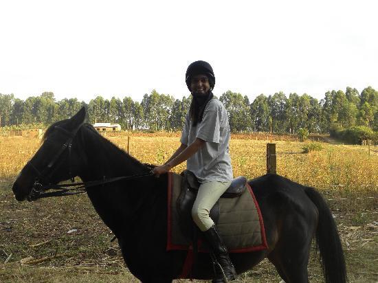 Kitale, Kenia: horse  riding available