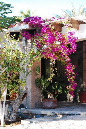 Hotel el Morro: les fleurs
