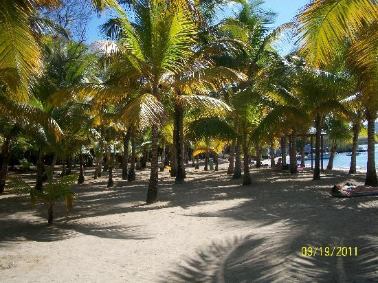 ClubHotel Riu Bachata: side beach