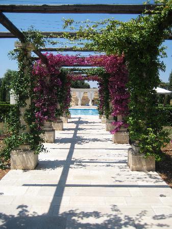 Villa Magnolia: Allée vers la piscine
