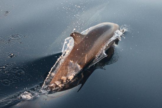 Club Med Kani : dauphin lors du sunset tour