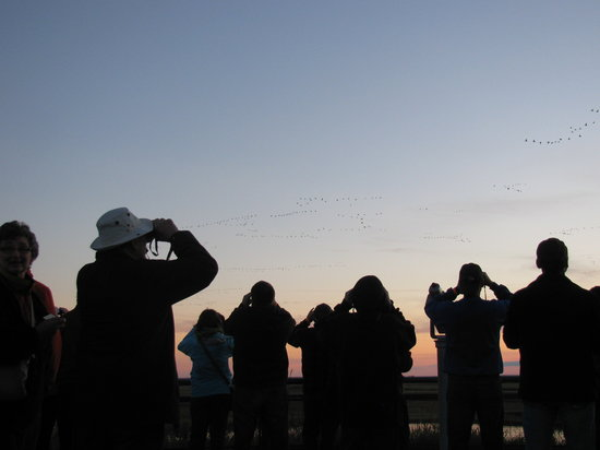 Oak Hammock Marsh Interpretive Centre : watching the birds from the roof of the interpretive centre