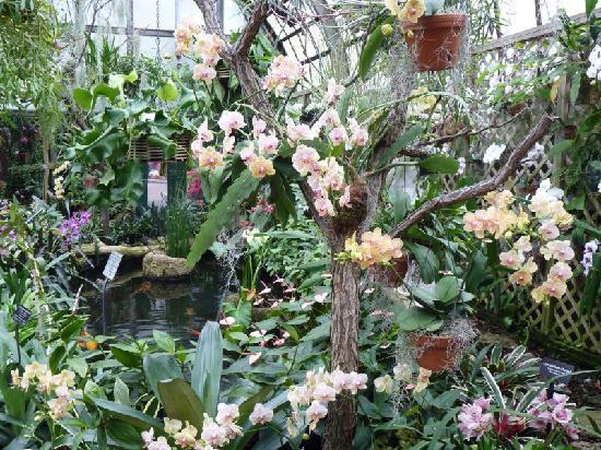 Lincoln Park Conservatory: Orchid House