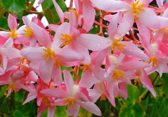 small sample of gorgeous flowers at ekena picture of ekena hana