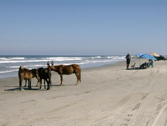 Carova, Caroline du Nord : Sunbathing with the Corolla Wild Horses