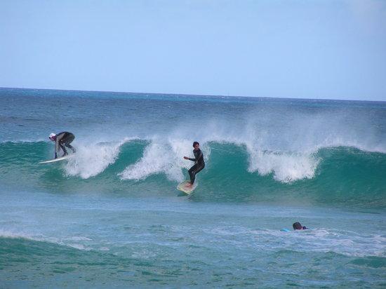 Escuela de surf 7 Island Surf: 1