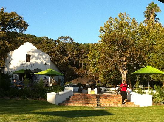 Warwick Wine Estate: Picnics on the Warwick lawns