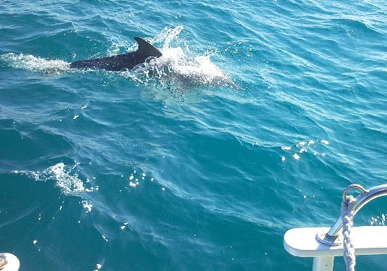 Reef Roamer Snorkel: Dolphins Usher Us Back to Shore