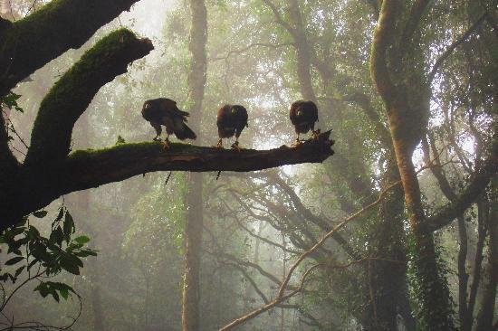 Ireland's School of Falconry: Thank you to Misty Sheriff for such a fabulous photo of her Hawk Walk with us.