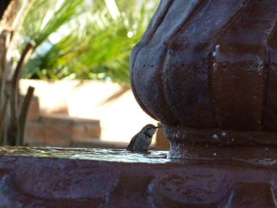 Rancho Sonora Inn: Fountain visitor