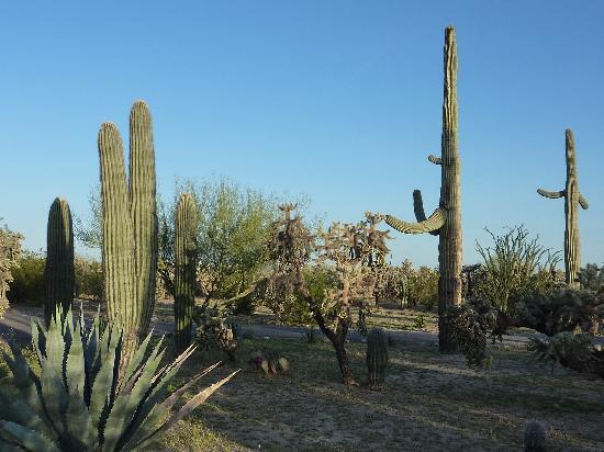 Rancho Sonora Inn: Desert Beauty
