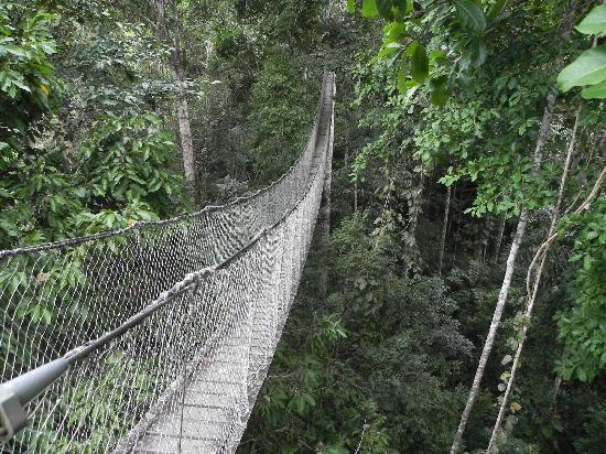 Inkaterra Reserva Amazonica: reserva amazonica