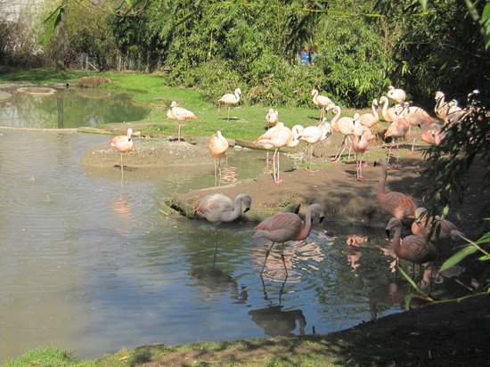 Zoo Zurich : Flamingos