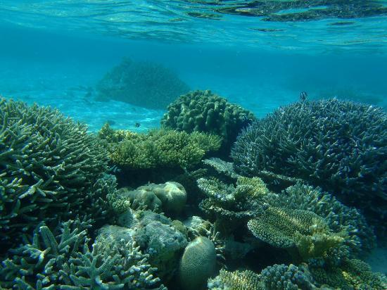 Maafushivaru: Clearest sea anywhere