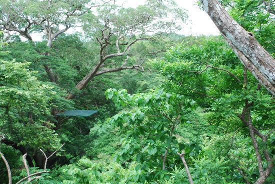 Pinilla Canopy Tour: JUNGLE DREAM