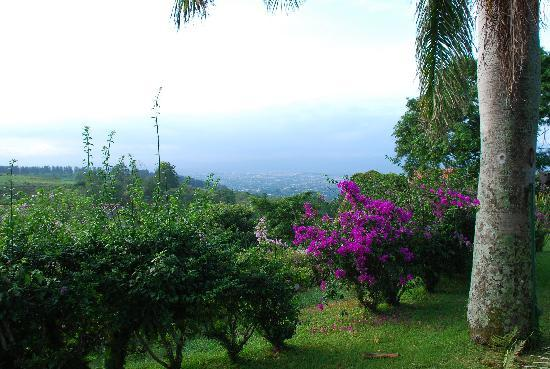 بورا فيدا سبا آند يوجا ريتريت: View from Pura Vida